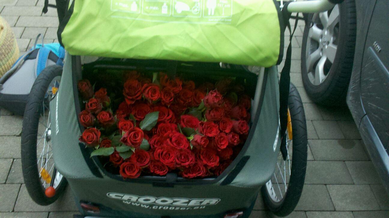 Fahrradanhänger voller Rosen